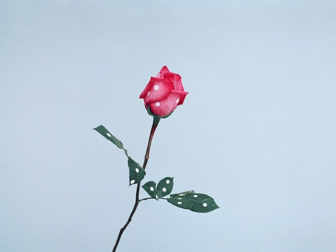 06 Ina Jang a rose 2009 World by Ina Jang in THISISPAPER MAGAZINE